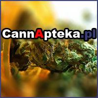 medyczna marihuana, cbd