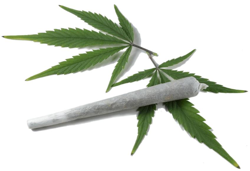 9 Odmian Marihuany, w Których Dominuje CBD, CannApteka.pl