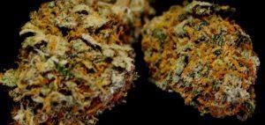ziolo-ziele-leczy-cbd-thc-medyczna-marihuana-cbd-thc-szusz-suszona-marihuana