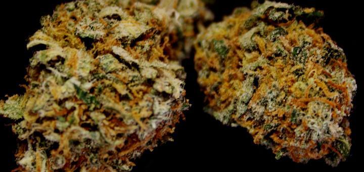 Badanie kwestionuje związek pomiędzy paleniem marihuany wśród nastolatków i spadkiem IQ, CannApteka.pl