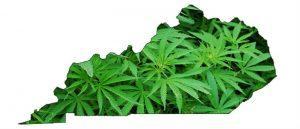 Ustawodawstwo chce zalegalizować medyczną marihuanę w Kentucky, CannApteka.pl
