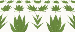 marihuana-kreatywnosc-rekreacyjna-marihuana-medyczna-marihuana-marihuana-marihuana