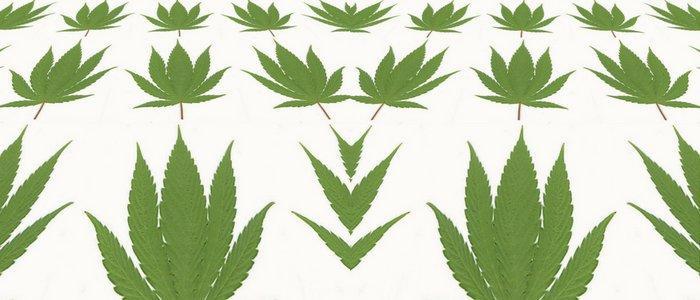 Czy cannabis zwiększa kreatywność? Badania sugerują, że to zależy od dawki i osobowości, CannApteka.pl