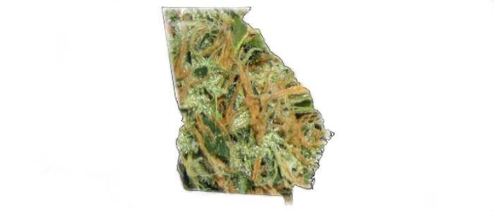 Georgia formuje komitet do spraw medycznej marihuany, CannApteka.pl