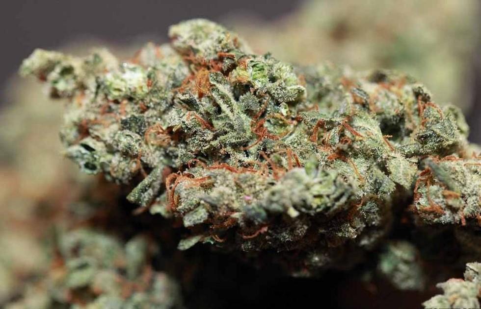 Marihuana może poradzić sobie z niektórymi źródłami depresji, CannApteka.pl
