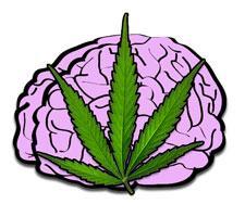 Przedawkowanie marihuany – wyjaśnienie, CannApteka.pl