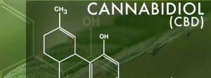 Anandamid w odniesieniu do niedoboru endokannabinoidów, CannApteka.pl