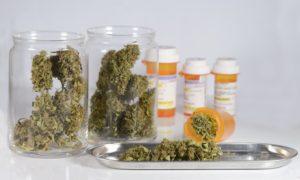 Nowe badania pokazują, że po legalizacji marihuany, CannApteka.pl