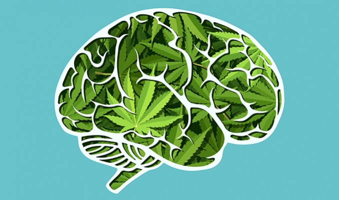 Jak marihuana wpływa na mózg? cz.1, CannApteka.pl