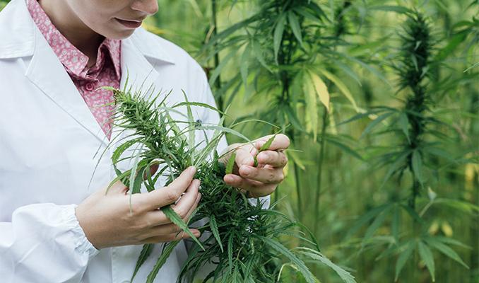 Wpływ marihuany na nadciśnienie, CannApteka.pl