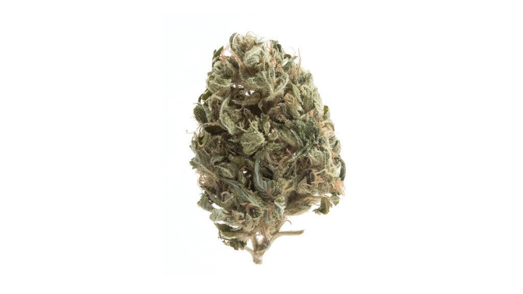 Marihuana zwiększa motywację do ćwiczeń, CannApteka.pl