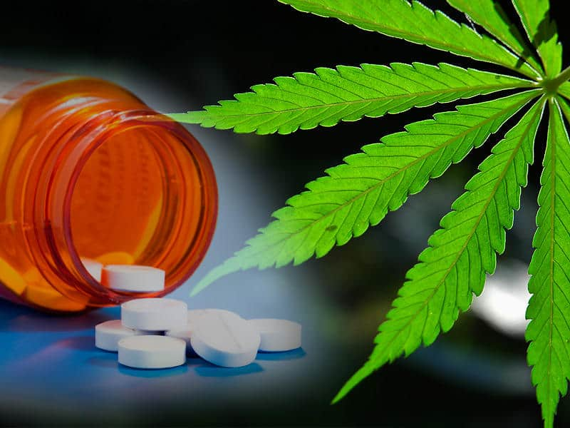 Legalizacja Medycznej Marihuany Może Zmniejszyć Przestępczość, CannApteka.pl