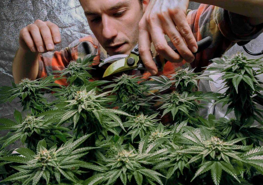 Dieta Cannabis, CannApteka.pl