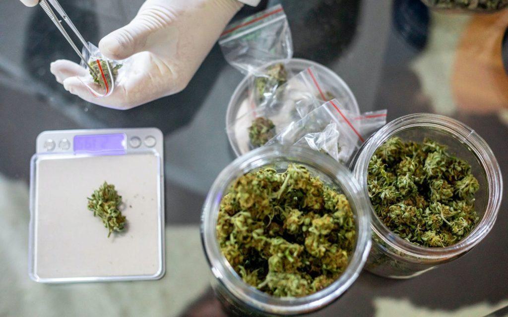 Marihuana w Leczeniu Chronicznego Bólu, CannApteka.pl