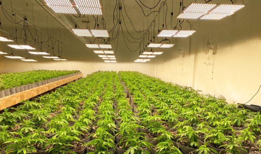 Meksyk Zalegalizuje Marihuanę w 2021, CannApteka.pl