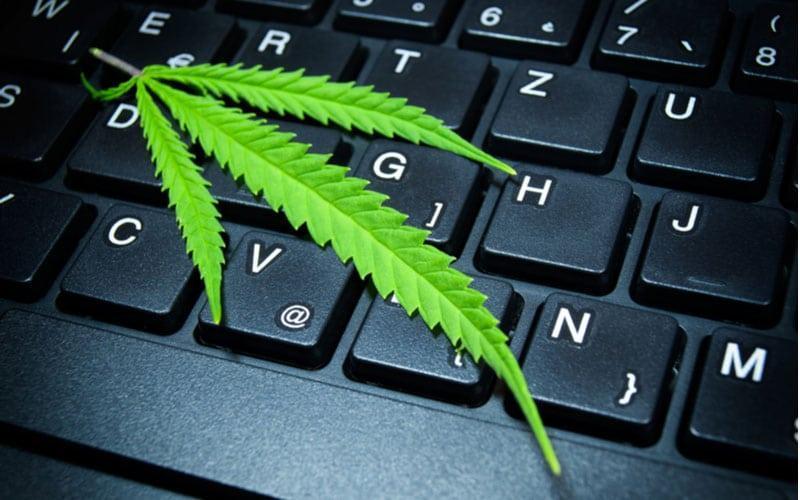 Sprzedaż Marihuany Podczas Pandemii, CannApteka.pl