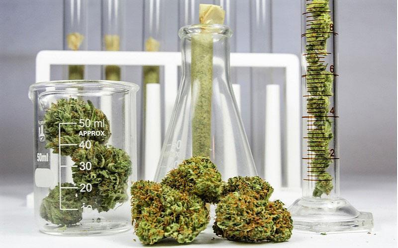 Ułatwiony Dostęp do Medycznej Marihuany w UK, CannApteka.pl